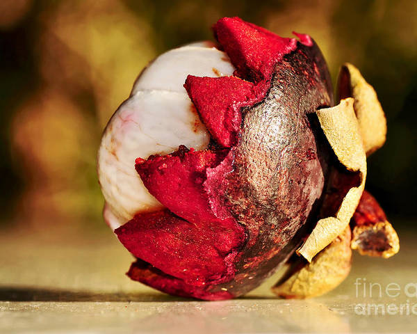 Photography Poster featuring the photograph Tropical Mangosteen - Ready To Eat by Kaye Menner