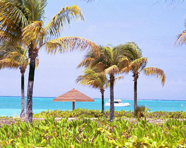 Turks And Caicos Poster featuring the photograph Tropical Winds by Carol Steele
