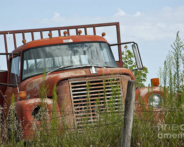 Old Truck Poster featuring the photograph Turned Out To Pasture by Wilma Birdwell