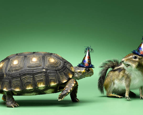 Horizontal Poster featuring the photograph Turtle And Chipmunk Wearing Party Hats by Jeffrey Hamilton