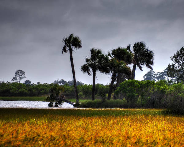 Landscape Poster featuring the photograph Two Mile Palms by Michael Athorn
