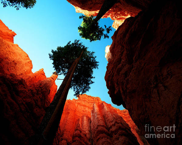 Bryce Canyon National Park Poster featuring the photograph Utah - Navajo Loop 4 by Terry Elniski
