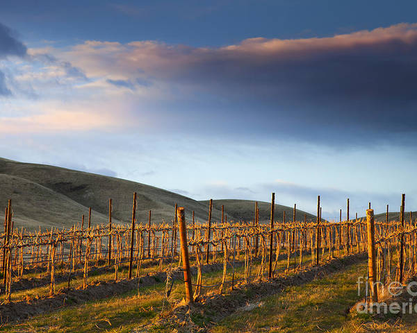 Vineyard Poster featuring the photograph Vineyard Storm by Mike Dawson
