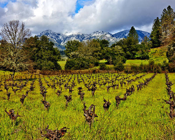 Vineyards Poster featuring the photograph Vineyards And Mt St. Helena by Garry Gay