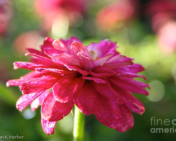 Flower Poster featuring the photograph Vivid Floral by Susan Herber
