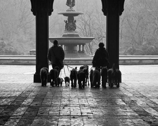 Bethesda Terrace Poster featuring the photograph Walk In The Park by Heidi Reyher