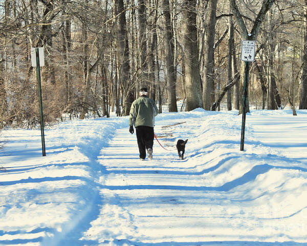 Winter Poster featuring the photograph Walking The Dog by Paul Ward