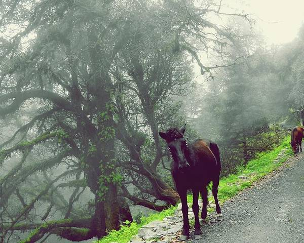 Horse Poster featuring the photograph Walking Time by Jayvardhan Kandpal