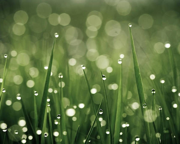 Horizontal Poster featuring the photograph Water Drops On Grass by Florence Barreau