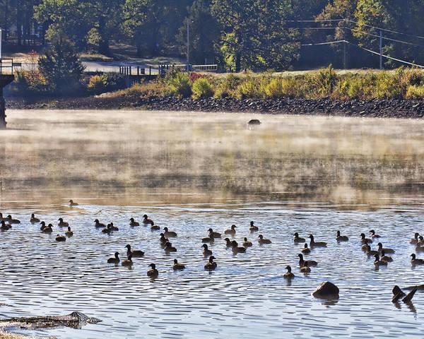 Water Fowl Poster featuring the photograph Water Fowl At Lake Wilhelmina Arkansas by Douglas Barnard