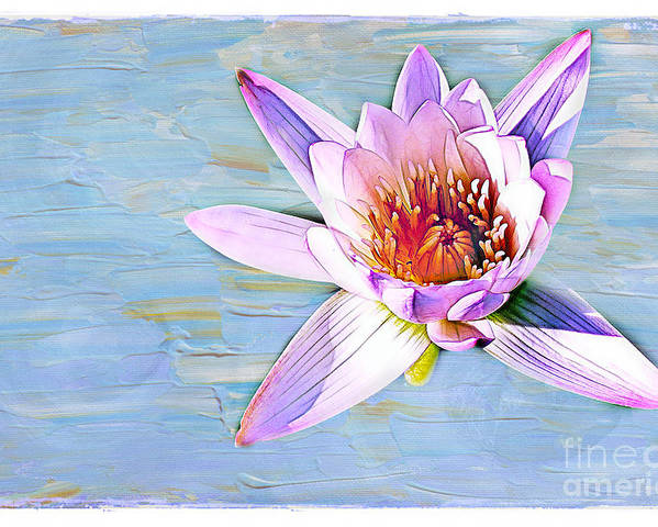 Water Poster featuring the photograph Water Lily by Judi Bagwell
