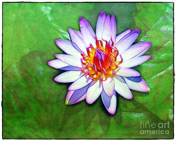 Water Poster featuring the photograph Water Lily Study by Judi Bagwell