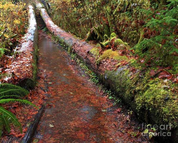 Hoh Rainforest Poster featuring the photograph Water Trail by Adam Jewell