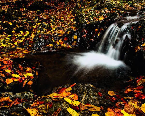 Nature Poster featuring the photograph Waterfall by Irinel Cirlanaru