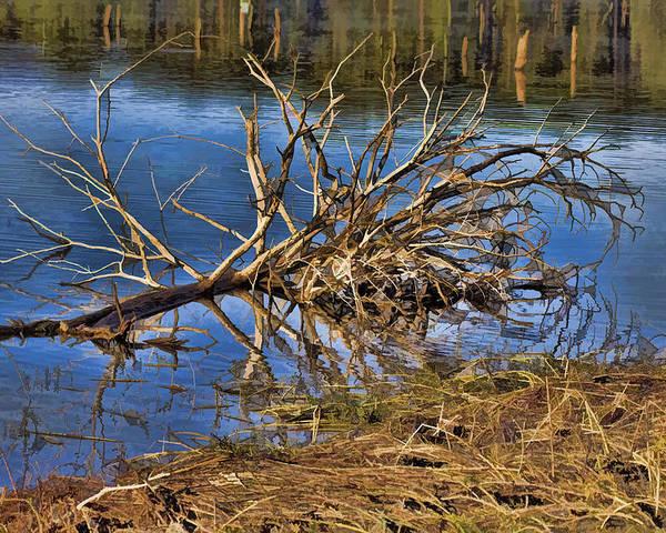 Waterlogged Tree. Tree Poster featuring the photograph Waterlogged Tree by Douglas Barnard
