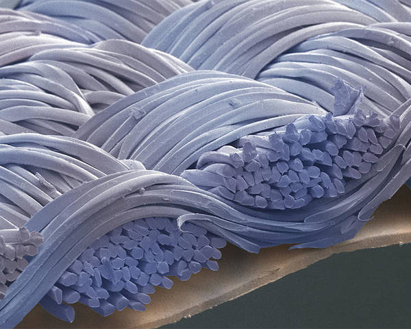 Magnified Image Poster featuring the photograph Waterproof Material, Sem by Power And Syred