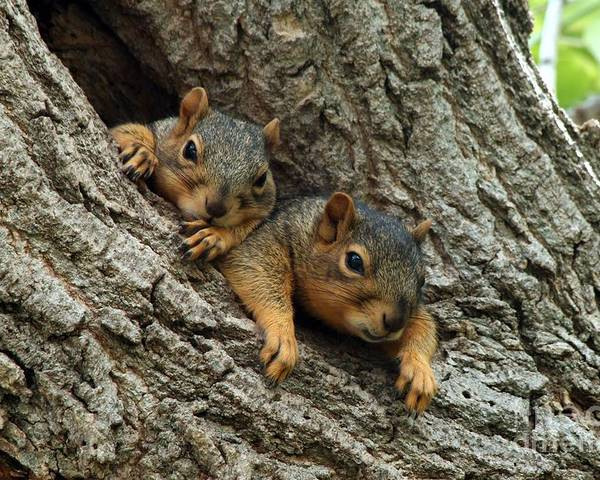 Squirrel Poster featuring the photograph What A Day by Lori Tordsen