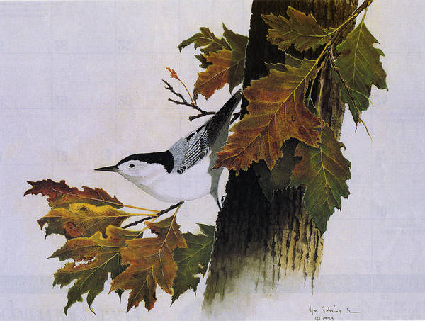 Bird Poster featuring the painting White-breasted Nuthatch by Bill Gehring