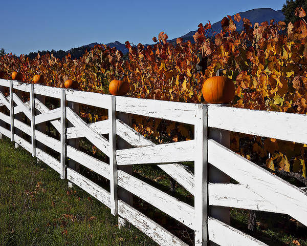 Fence Poster featuring the photograph White Fence With Pumpkins by Garry Gay