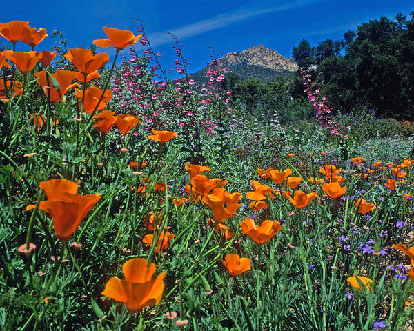 Landscapes Poster featuring the photograph Wildflower Wonderland by Kathy Yates