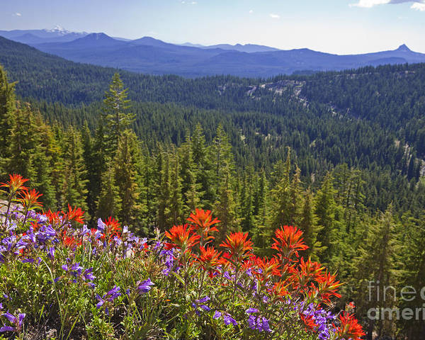 Nature Poster featuring the photograph Wildflowers And Mountaintop View by Ellen Thane and Photo Researchers