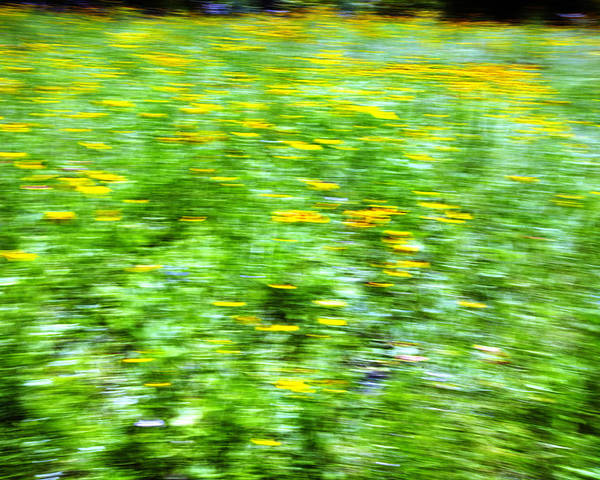 Abstract Poster featuring the photograph Wildflowers And Wind 2 by Skip Nall