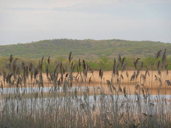 Landscape Poster featuring the photograph Wildlife Refuge by Angela Hansen