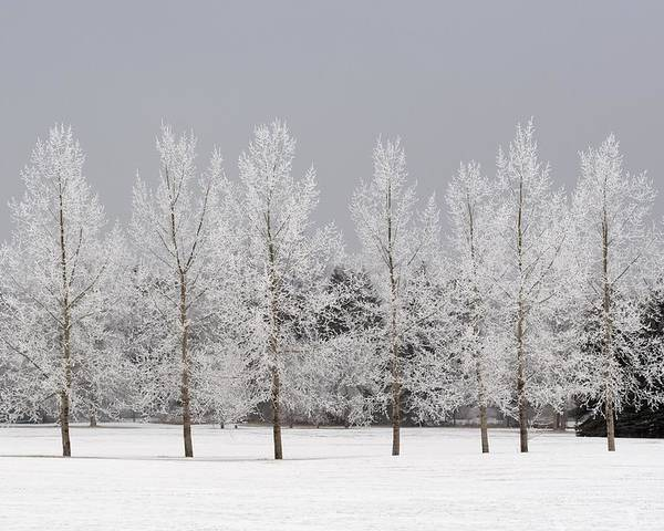 Bare Tree Poster featuring the photograph Winter, Calgary, Alberta, Canada by Michael Interisano