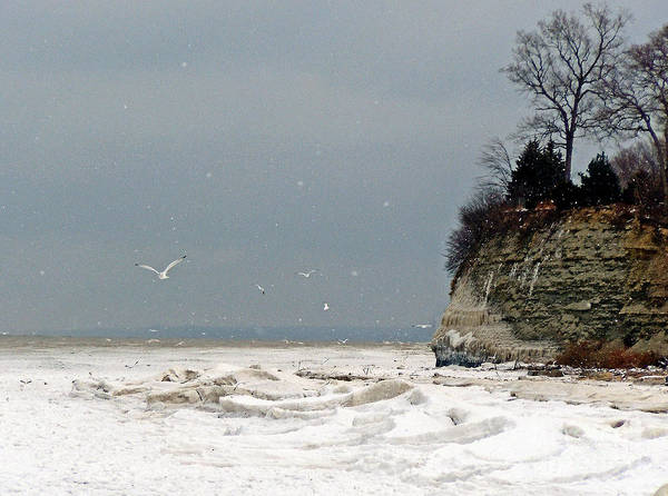 Landscape Poster featuring the photograph Winter Gulls by Bob Niederriter