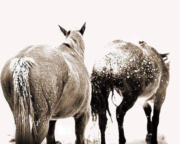 Horse Poster featuring the photograph Winter Horses by Megan Chambers