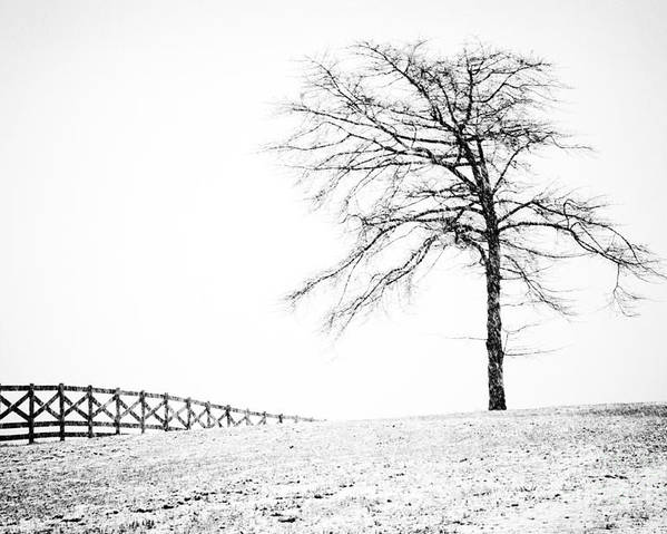 Black And White Landscape Photography Poster featuring the photograph Winter In Black And White by David Waldrop
