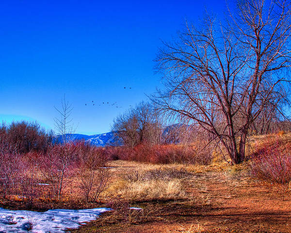 Denver Poster featuring the photograph Winter In South Platte Park by David Patterson