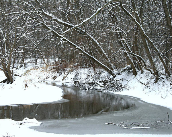 Nature Poster featuring the photograph Winter In The Park by Kay Novy