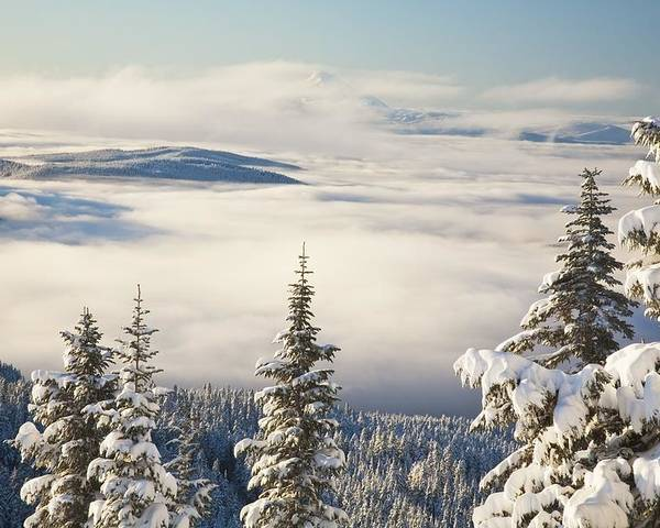 Forest Poster featuring the photograph Winter Landscape With Clouds And by Craig Tuttle