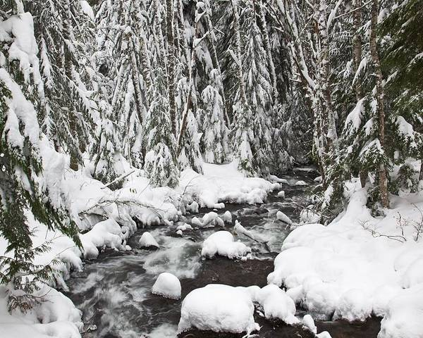 Flow Poster featuring the photograph Winter Snow Along Still Creek In Mt by Craig Tuttle