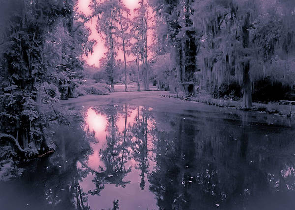 Swamp Poster featuring the photograph Winterland In The Swamp by DigiArt Diaries by Vicky B Fuller