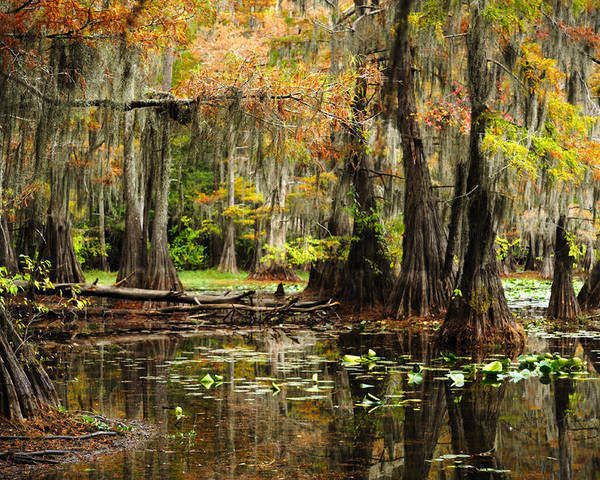 Cypress Trees Poster featuring the photograph Wonderful World by Iris Greenwell