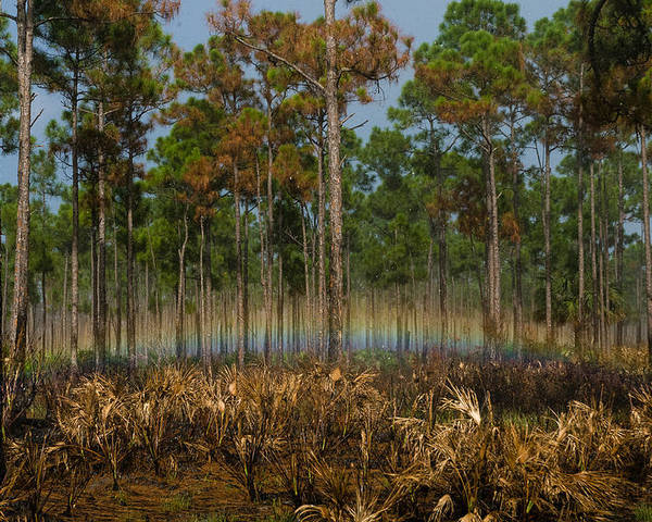 Janathon Dickenson State Parke Poster featuring the photograph Woodland Rainbow by Robert Swinson