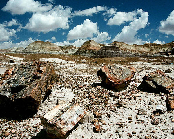 Petrified Wood Poster featuring the photograph Woody Landscape by Frank Townsley