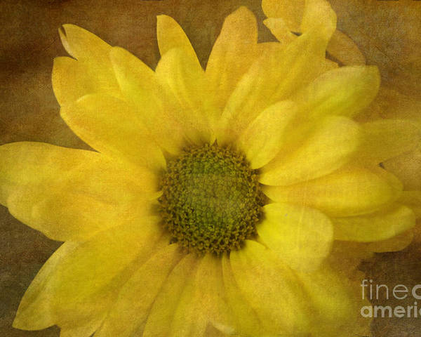 Mum Poster featuring the photograph Yellow Mums by Benanne Stiens