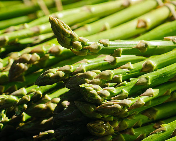 Harvest Poster featuring the photograph Yummy Asparagus by Connie Cooper-Edwards