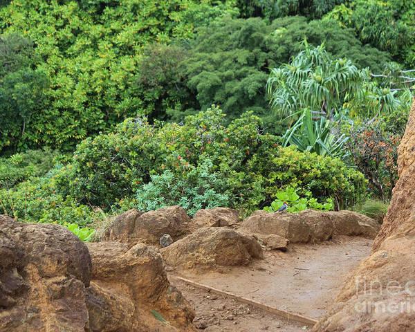 Poster featuring the photograph Muddy Kalalaua Trail - Kauai by Rupali Kumbhani