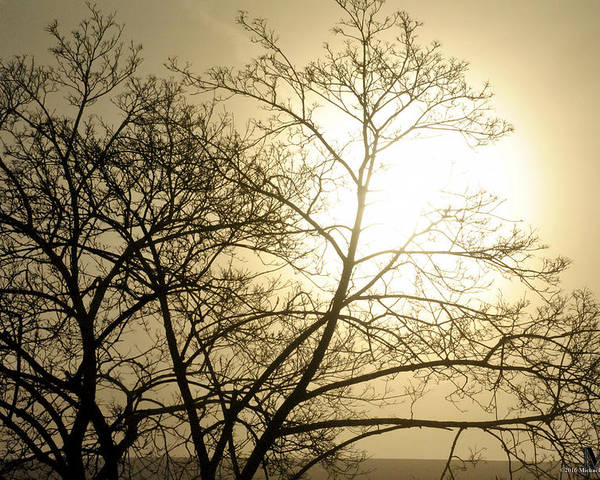 Buffalo Poster featuring the photograph 07 Foggy Sunday Sunrise by Michael Frank Jr
