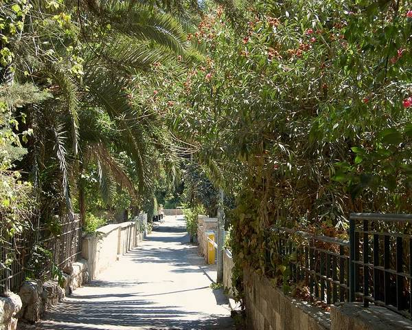 Israel Poster featuring the photograph A Walk In Rehavia by Susan Heller