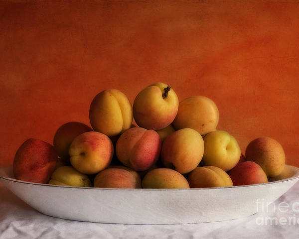 Apricot Poster featuring the photograph Apricot Delight by Priska Wettstein