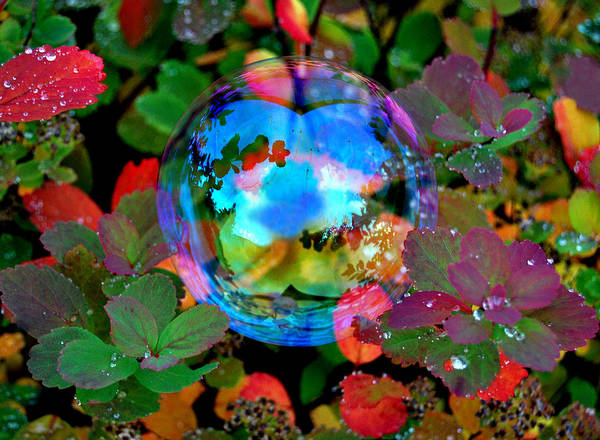 Bubble Poster featuring the photograph Autumn Bubble by Marilynne Bull