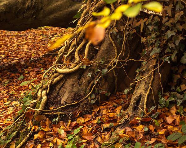 Autumn Poster featuring the photograph Autumn by Jacek Tomczak