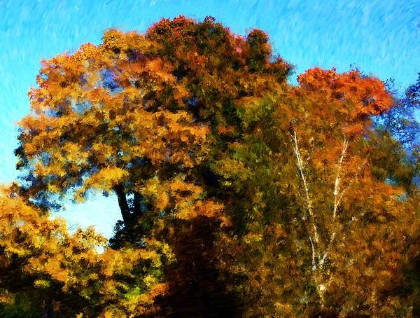 Digital Photography Poster featuring the photograph Autumn Leaves by David Lane
