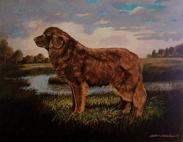 Newfoundland Water Dog Life Saving . Poster featuring the painting Beautiful Bear-like Friend. by Alan Carlson