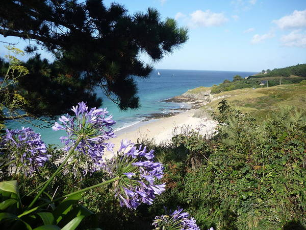 Coast Brittany Flowers Sea Ocean Bay Pines France Poster featuring the photograph Bel-ile-en-mer by Lizzy Forrester
